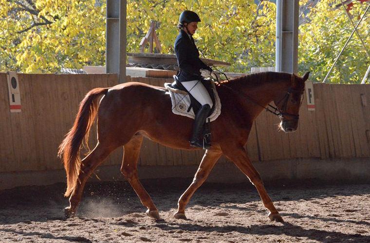 reitstall-pferd